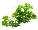 Parsley (Petersilie)